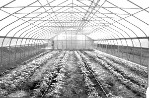 30 ft greenhouse